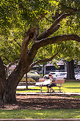 A guitarist practices in the middle of Moore Square during Hopscotch Music Festival, Raleigh, NC. September 7, 2012.