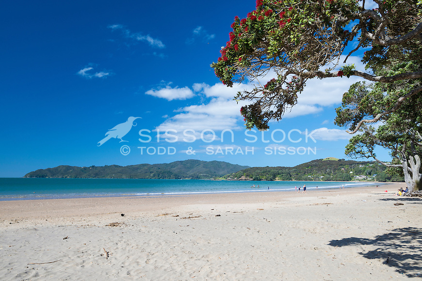 Pohutukawa tree at Coopers Beach, Doubtless Bay, New Zealand - stock photo, canvas, fine art print