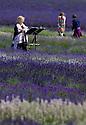 2015_07_09_lavender