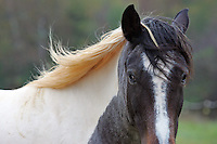 Horse with mane.