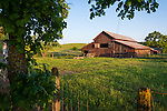 Wooden barn, spring, WIllow Springs, Calif.