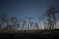 ISRAEL, Carmel Forest : This pictures shows the charred and desolated landscape after a raging fire ravaged the Carmel forest close to Kibbutz Beit Oren, near the northern Israeli city of Haifa, on December 3, 2010 as thousands of Israeli firemen and rescuers fight to control a massive forest fire that has already killed 41, as global help poured in to battle the biggest inferno in the country's history.© ALESSIO ROMENZI