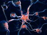 Network of neurons, Nervous system, Brain cells, scientific conceptual 3D illustration