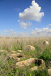 Tel Miqne, site of biblical Ekron