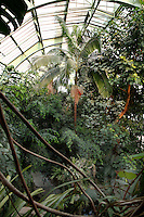 Tropical Rainforest Glasshouse (formerly Le Jardin d'Hiver or Winter Gardens), 1936, Rene Berger, Jardin des Plantes, Museum National d'Histoire Naturelle, Paris, France. Low angle view from the third floor of the cave of luxuriant tropical foliage with a Howea Forsteriana palm tree in the middle, beneath the glass and metal roof structure of the Art Deco style glasshouse.