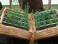 "Adorable ""Book"" of herbs - herb container garden in a wicker planter made to look like an open book"