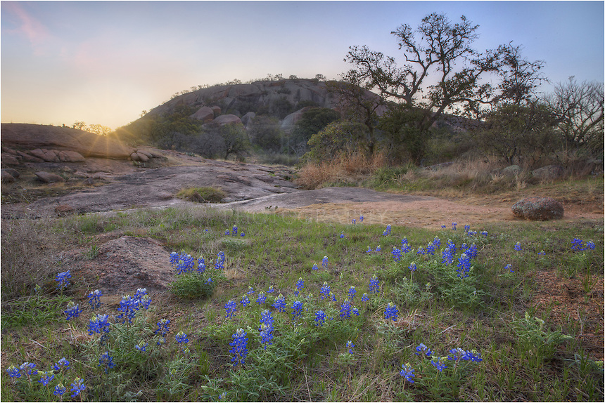 Bluebonnets fill the rocky Texas landscape in this image from Enchanted Rock State Park.