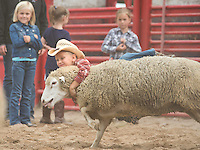 Blaine resident Matthew Warme, 5, takes a ride on a sheep Saturday, September 14, 2013, during the mutton busting portion of the Falcon Frontier Days Rodeo. <br /> <br /> Kathy M Helgeson/UWRF Communications