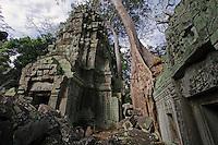 A silk cotton or kapok tree (Ceiba Pentandra) grows over the stone temples of Ta Prohm, built by Jayavarman VII at Angkor Wat - Siem Reap, Cambodia...