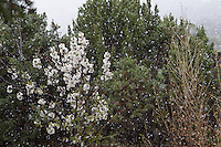 an early snowfall while plants bloom