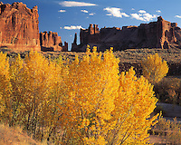 Autumn Cottonwoods, Arches National Park, Utah  Courthouse Wash with Courthouse Towers beyond  Populus fremontii