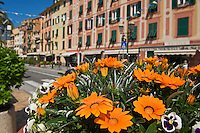 Flowers on street, Santa Margherite Ligure, Liguria, Italy