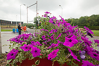 Petunias grow in a wagon outside the old Holmesburg Prison. Inmates involved in the composting program built the wagon and produced the compost the flowers are growing in.