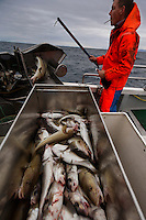 Long line fisherman in Olafsvik is Magnus Gunnlaugsson..Email: dugga@simnet.is.Phone: +354 436 11 31 or 899 0431