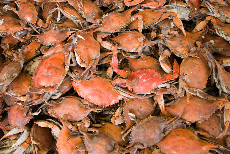 Washington DC, Food, fresh fish and shellfish market on Maine Ave, selling Chesapeake Bay blue crab and various fish, such as fillet of red snapper, all fresh and live off the boats.  Photo is of cooked crab, which turns red when steam cooked..Photo  wash99320-70713..Photo copyright Lee Foster, www.fostertravel.com, lee@fostertravel.com, 510-549-2202.
