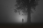 Silhouette of a man standing under a tree on a foggy night facing a mysterious light with birds flying around him