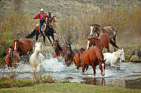 Cowboys herd running horses back to the ranch.