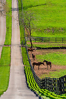 Lexington-Horse Farms-Misc.