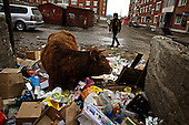 A cow looks for food in a garbage dump in Zabaikalsk, a town on the Russian side of the Russian-Chinese border.