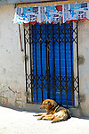South America, Bolivia, La Paz. Dog of La Paz.