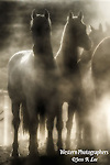 A photo of horses surrounded by dust.
