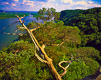 Juniper Snag & Mississippi River, Effigy Mounds National Monument, Iowa  Hanging Rock View