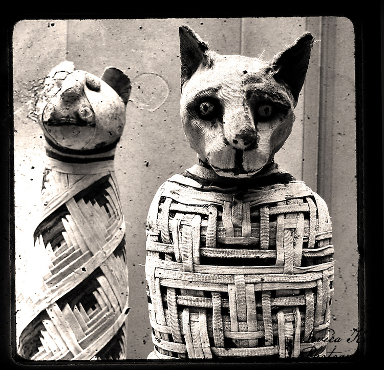 Mummified Egyptian Cat and Kitten from the British Museum, London