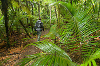 Hiker walking through Nikau Palm forest at Kohaihai on Heaphy Track, Kahurangi National Park, West Coast, Buller Region, New Zealand