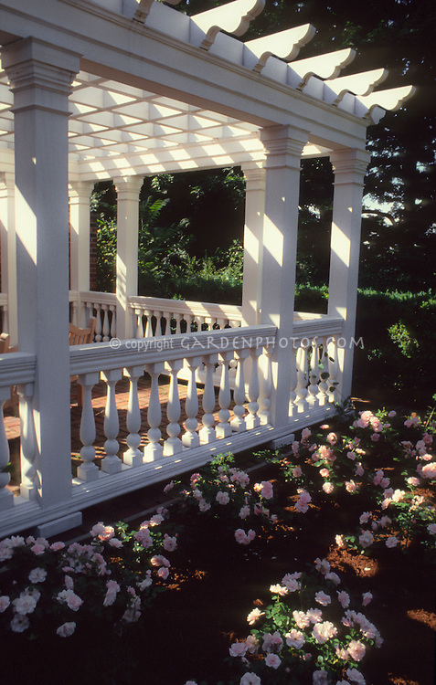 Rose Gazebo in shadows with rosa roses pink, classic styling with fragrant landscaping