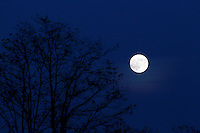 The moon rises over some trees in Madison County, VA.   Photo/Andrew Shurtleff