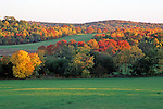 Fall Color on a Hillside in New Braintree