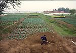 Farmer digging in field near Xian, China