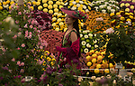 A lady looks at flower displays in the Great Pavilion at the RHS Chelsea Flower Show in London