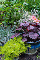 Container gardens pots, Festuca, blue pots, Alyssum Lobularia in bloom, purple Heuchera Grape Expectations, Festuca blue grass , yellow yellow Sedum, Begonia in flower