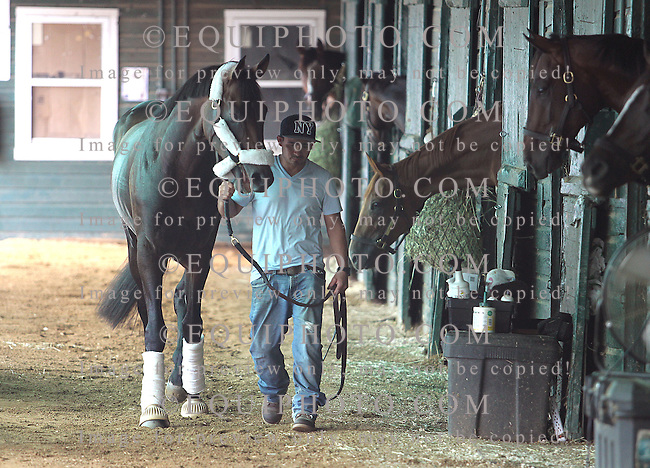 Preakness Stakes Champion Exaggerator arrives at Monmouth Park in Oceanport, New Jersey on Thursday July 28, 2016 with groom Enrique Morales.  Exaggerator will renew his rivalry with Kentucky Derby Winner Nyquist, who he defeated in the Preakness, in the $1,000,000 Grade 1 Haskell Invitational at Monmouth Park on Sunday July 31, 2016.   Photo By Bill Denver/EQUI-PHOTO