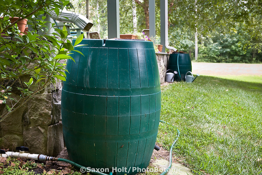 Rain barrel by gutter drain pipes for water storage and landscape irrigation
