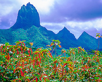 Peaks on Moorea, Island of Moorea, French Polynesia, Society Islands, South Pacific Ocean, Belvedere Lookout above Opunohu Valley
