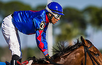 OLDSMAR, FL - JANUARY 21: No Fault of Mine #3 (blue cap), ridden by Daniel Centeno, wins the Wayward Lass Stakes, on Skyway Festival Day at Tampa Bay Downs on January 21, 2017 in Oldsmar, Florida. (Photo by Douglas DeFelice/Eclipse Sportswire/Getty Images)