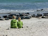 Kinder beobachten Kegelrobben und Seehunde aus nächster Nähe, Helgoland, am Strand der Düne, Kegelrobbe, Kegel-Robbe, Halichoerus grypus, gray seal und Seehund, See-Hund, Phoca vitulina, harbor seal, common seal