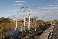 A boardwalk through Everglades National Park, Florida