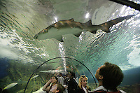 France. Alpes-Maritimes province.  Antibes. The shark tunnel in Marineland. The public (men, women and a boy) watch a shark in the main 30 meter long tunnel. The aquarium contains two millions liters of salt water. Marineland is an animal exhibition park and receives more than a million visitors per year. 03.11.06 © 2006 Didier Ruef ..