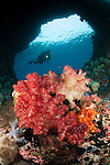 """A diver approaches soft corals (Dendronepthya sp.)  through """"Boo Windows"""" Southern Raja Ampat, West Papua, Indonesia"""