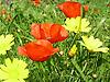 meadwo in spring in Majorca<br /> <br /> pradera en primavera en Mallorca<br /> <br /> Fr&uuml;hlingswiese auf Mallorca<br /> <br /> 2272 x 1704 px<br /> 150 dpi: 38,47 x 28,85 cm<br /> 300 dpi: 19,24 x 14,43 cm