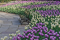 Bench, Tulips, , Central Park, Conservatory Garden, New York CIty, New YorK,