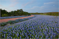 Along a dirt road in San Saba County, I found this field of Texas bluebonnets that stretched to the horizon. It was my own little piece of blue heaven. Wildflowers in the Texas Hill Country can be an amazing sight!