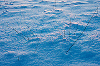 Snow crystals in a snow-covered field in The Cotswolds, Swinbrook, Oxfordshire, United Kingdom