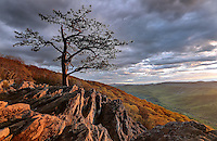 Single tree in rock outcrop at Ravens Roost on the Blue Ridge Parkway. Photo/Andrew Shurtleff