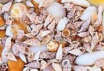 Beach shells, Cuba