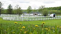 Winners Circle Farm, Malta NY - Lorraine Conoby