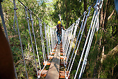 Woman crossing suspension bridge while Ziplining on the Big island with Kohala zipline